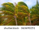 Palm Trees During Strong Storm...