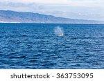 whale watching dana point... | Shutterstock . vector #363753095