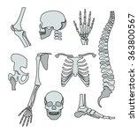 human skeleton. vector flat... | Shutterstock .eps vector #363800567