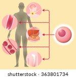 stem cell and regenerative...   Shutterstock .eps vector #363801734