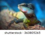 Lizard Dragon   Chameleon  ...