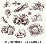 vector hand drawn vegetables... | Shutterstock .eps vector #363828875