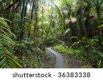 Caribbean National Forest  El...