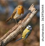 Perched On The Same Branch A...
