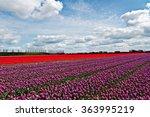 beautiful tulips field in... | Shutterstock . vector #363995219