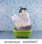 Stock photo cat reads the morning newspaper while sitting on the toilet 364030037