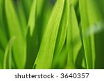 green background | Shutterstock . vector #3640357