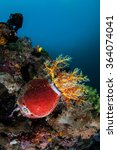 Постер, плакат: A colorful sea cucumber