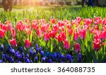 fresh pink tulips in the... | Shutterstock . vector #364088735