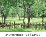 an old pruneyard in western... | Shutterstock . vector #36413437