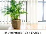 trees in pot near window in the ... | Shutterstock . vector #364172897