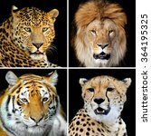 Four Big Wild Cats  Leopard ...