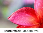water droplets on the petals of ... | Shutterstock . vector #364281791