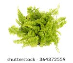 top view for small plant on... | Shutterstock . vector #364372559