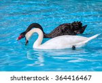 Black And White Swan With...