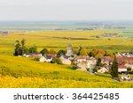 champagne wine fields in autumn