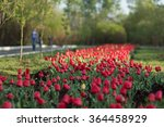 A Tulip Flower Bed In A Park