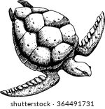 sea turtle on a white... | Shutterstock .eps vector #364491731