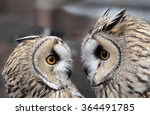 Two Boreal Owls. In Europe ...