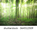 beautiful nature at morning in... | Shutterstock . vector #364512509
