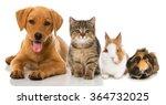 Stock photo pets 364732025