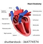 part of the human heart. anatomy | Shutterstock .eps vector #364774574