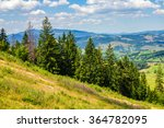 coniferous forest on a steep mountain slope - stock photo