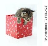 Cute Cat In A Red Box