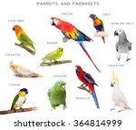 Parrots And Parakeets Educatio...