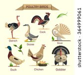 Farm Birds Vector Set In Flat...