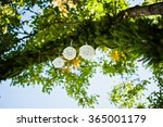 wedding decorations on the pine ... | Shutterstock . vector #365001179