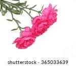 red textile carnation on white... | Shutterstock . vector #365033639