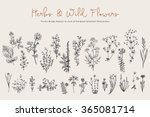 Herbs And Wild Flowers. Botany...