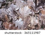 Fall Frosty Leaves Background...