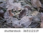 Fall Frosty Leaves Background ...