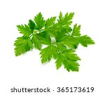 Fresh Parsley On White...