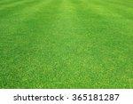 Grass Field   Green Grass...