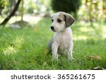 Adorable Mixed Breed Puppy In...
