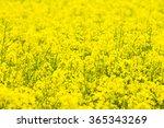 green field and blue sky   | Shutterstock . vector #365343269