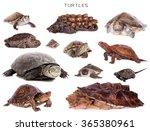 Turtles Set Isolated On White...