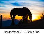 horse eating grass in colorful... | Shutterstock . vector #365495105