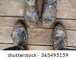 wellington boots really muddy | Shutterstock . vector #365495159