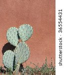 Cactus and stucco wall - stock photo