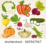 vegetable isolated mix. fresh... | Shutterstock .eps vector #365567567