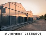 The Greenhouse With Sunset...