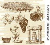 vineyard  hand drawn collection | Shutterstock .eps vector #365586641