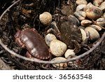 Fresh Crab And Shells In A...