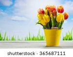 Bouquet Of Multicolored Tulips...