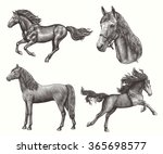 Stock vector horses design set hand drawn engraving vector vintage illustration isolated on color background 365698577