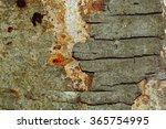 The Texture Of Tree Bark...
